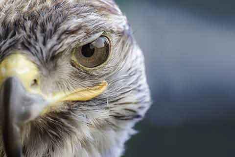 aves cetreria2