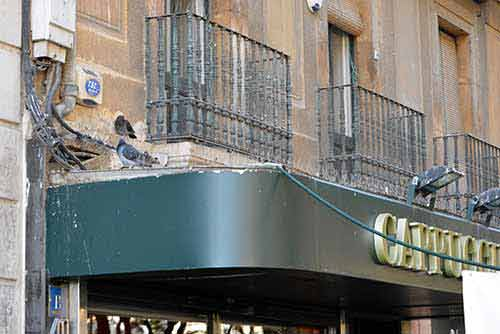 Excrementos de palomas en letreros